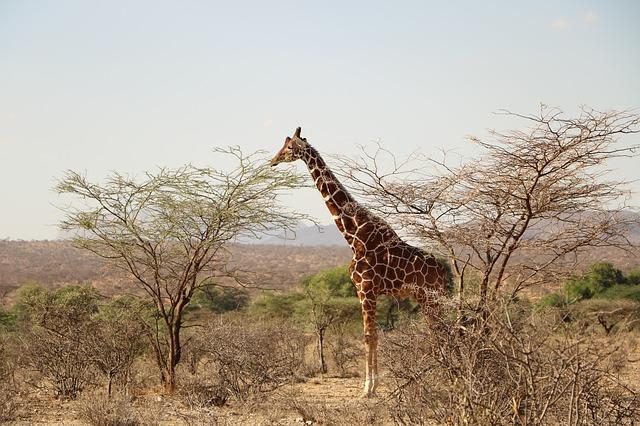 Poďte do Afriky