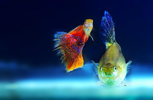 Výber a nákup rybičiek do akvária