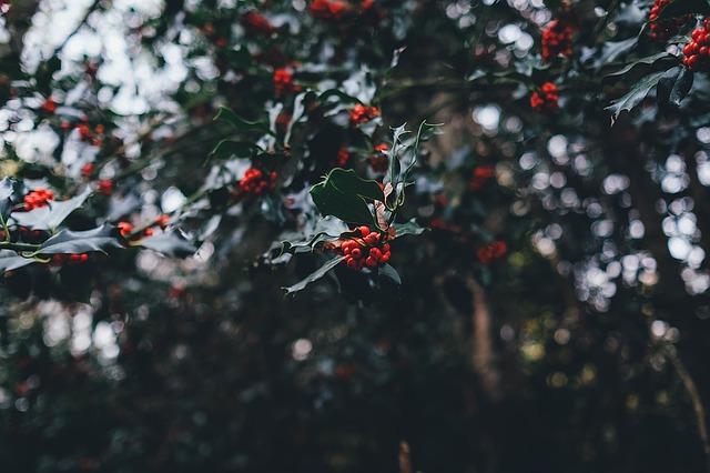 vánoční bobuoe