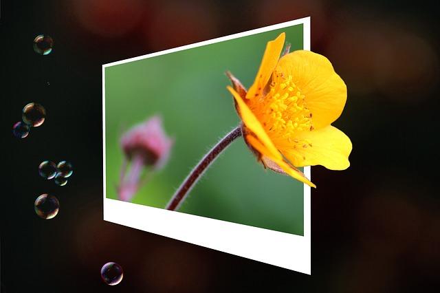 fotograie