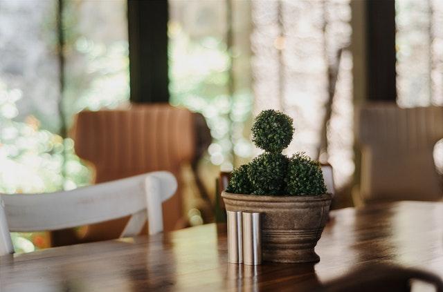 Detail na rastlinu v kvetináči na stole v presklenej miestnosti