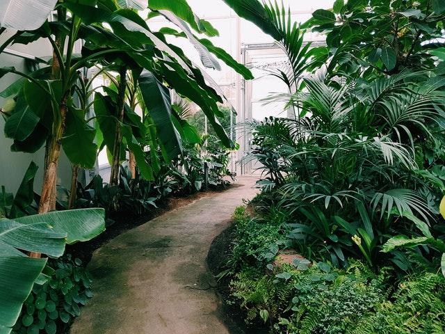 Zimná záhrada s množstvom zelených rastlín